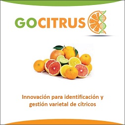 GOCITRUS continúa su andadura para aportar innovación y valor añadido al sector citrícola